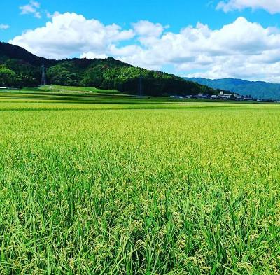安心・安全・美味しいお米を選ぶなら~低農薬栽培の魅力~