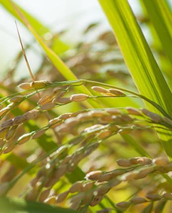 お米の美味しさ長持ち~保存方法をご紹介~