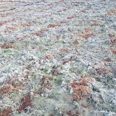 コシヒカリは豊富なサイズを揃える「むらかみファーム」の伊賀米~ご当地自慢ランキングでも高評価~