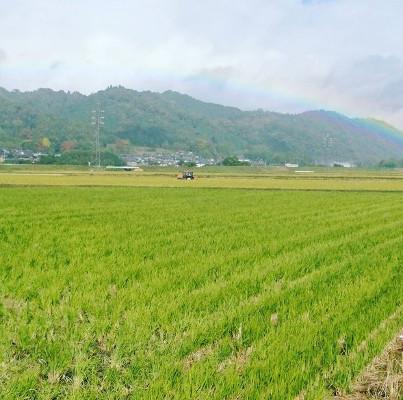 コシヒカリのおすすめは伊賀産!~美味しいワケは気候や土壌~