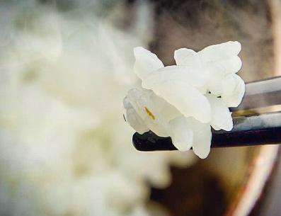 コシヒカリは「よしもと47シュフラン2016」で美味しいと評価された「伊賀米コシヒカリ心」を