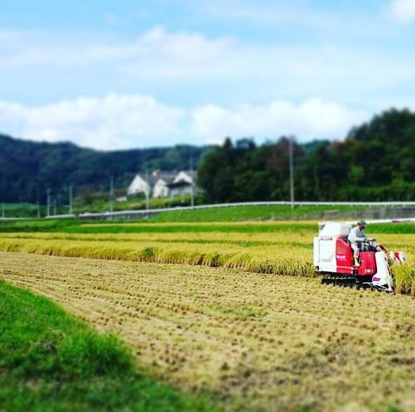 通販でおいしいお米をお届けする「むらかみファーム」がおすすめする伊賀産の精米・玄米